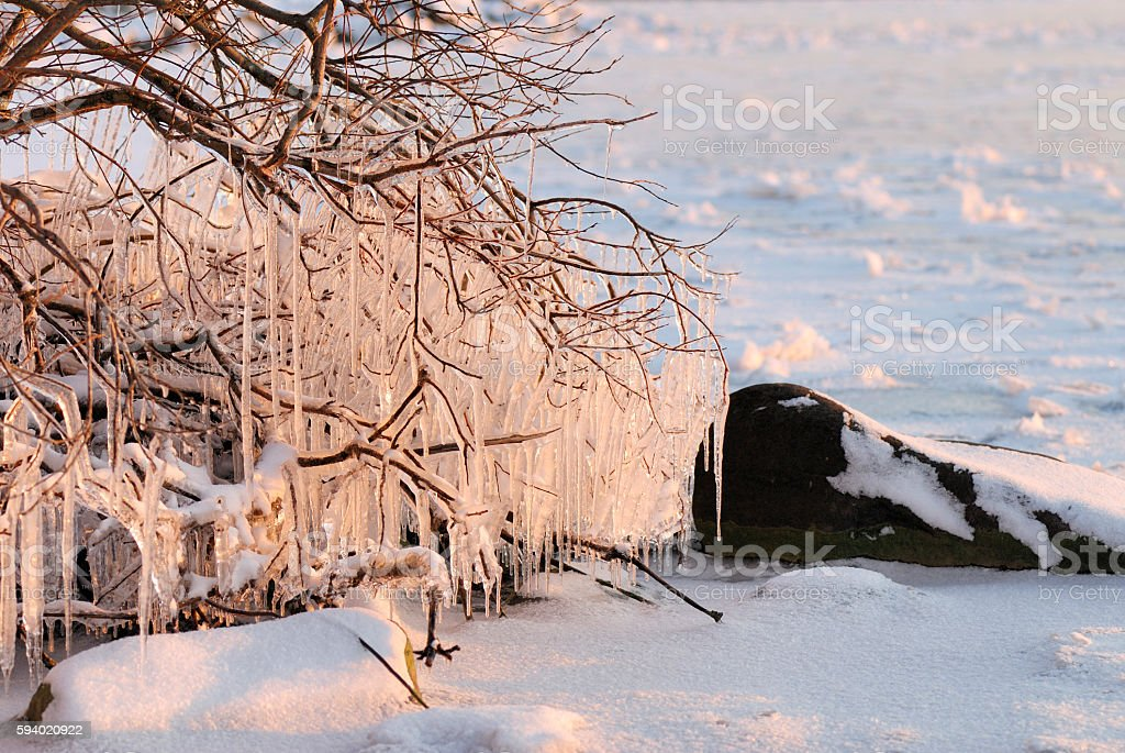 Icicles hanging from bush branches stock photo