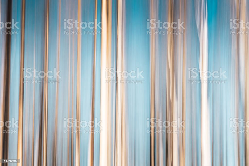 ICM-Birch trees with blue sky stock photo