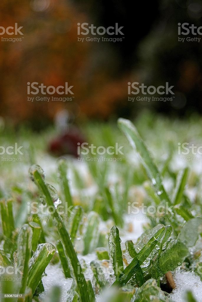 Icy Blades royalty-free stock photo