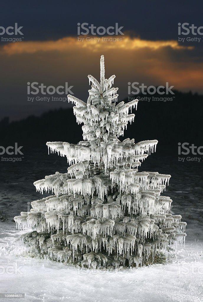 icy christmas tree royalty-free stock photo