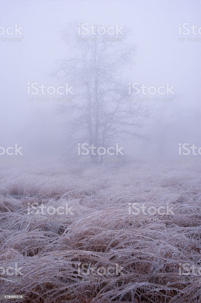 Icy, Cold, and Foggy Day on Mount Magazine, Arkansas stock photo