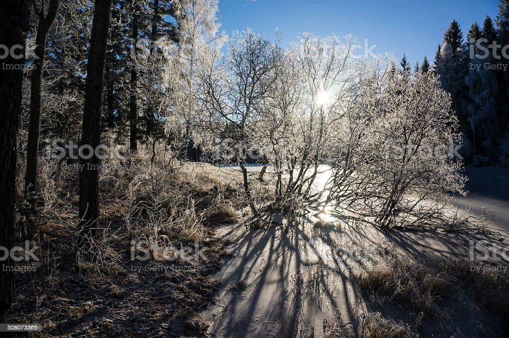 Icy conditions in Norwgian forest royalty-free stock photo