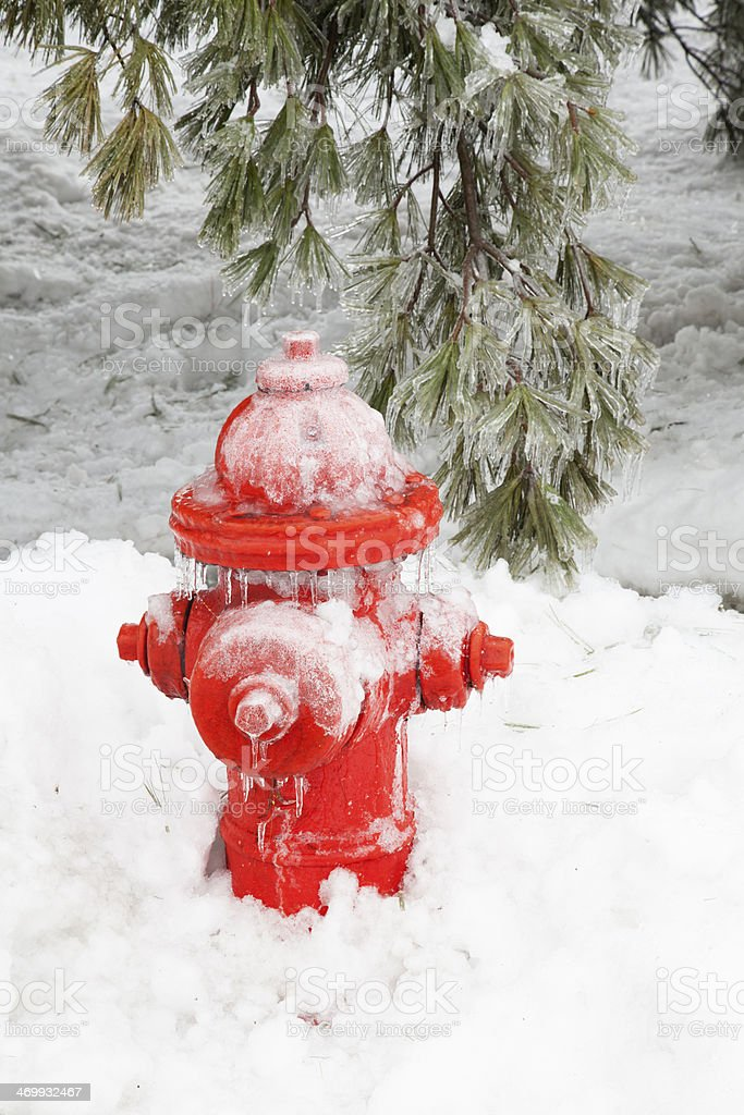 Icy Fire Hydrant and Pine Tree After an Ice Storm stock photo