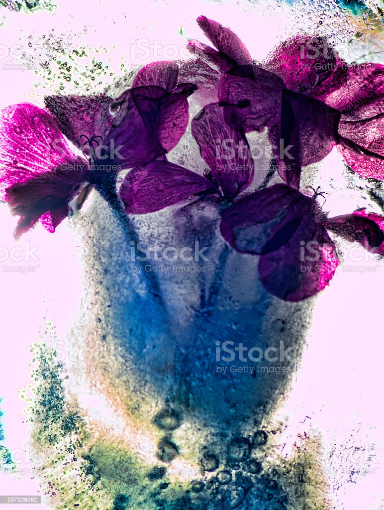 Icy flower stock photo