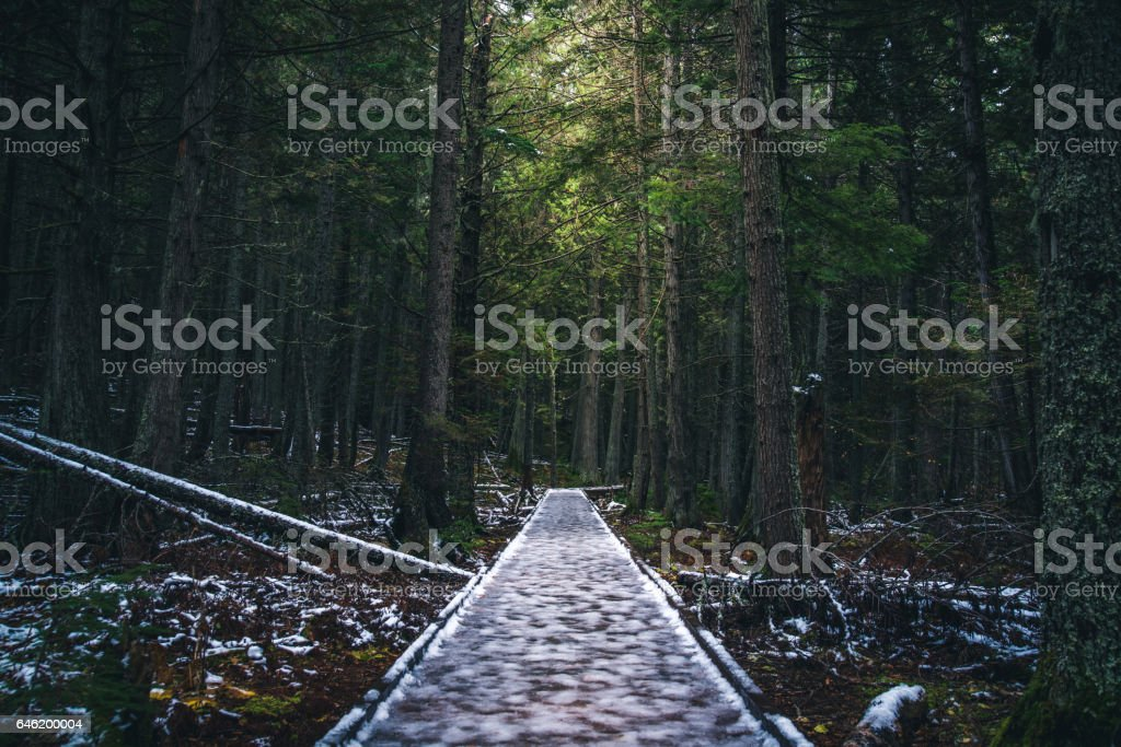 Icy forest path. stock photo