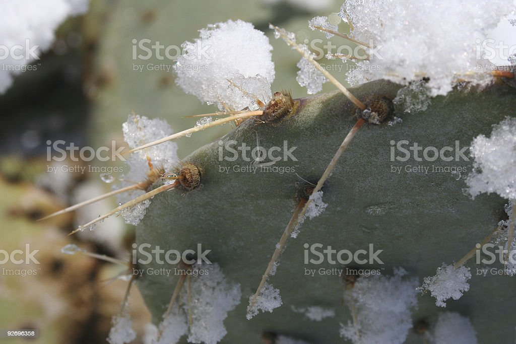 Icy thorns royalty-free stock photo