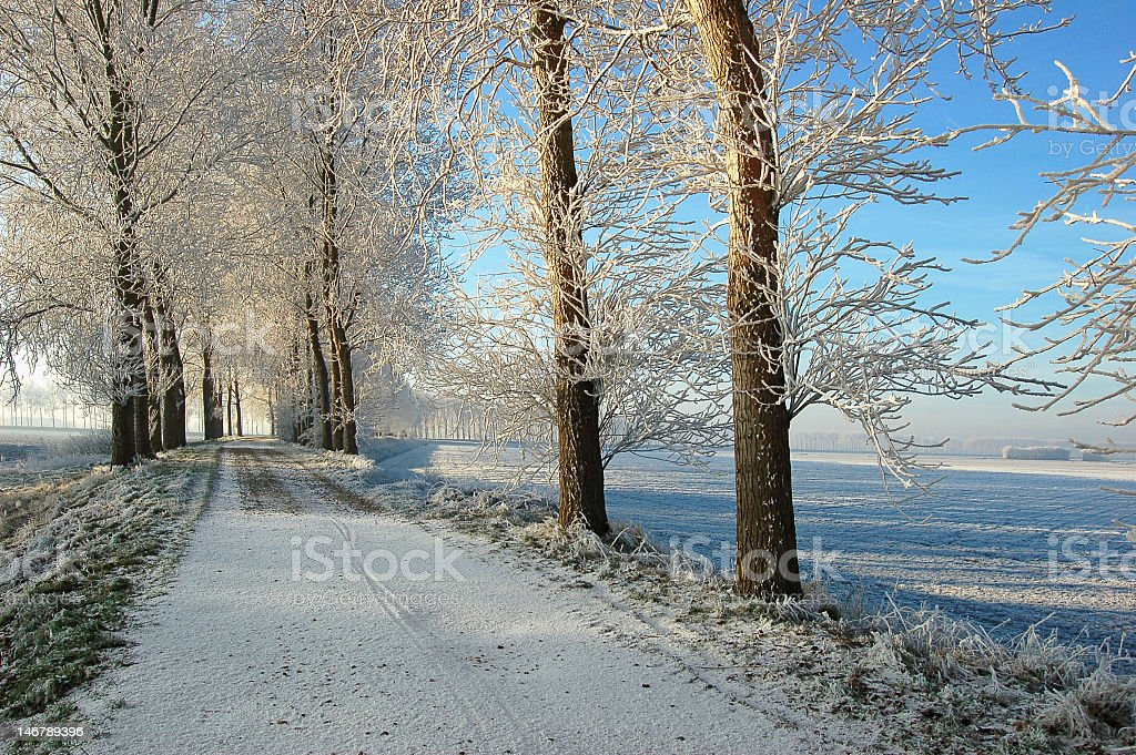 icy trees on snowy dike royalty-free stock photo