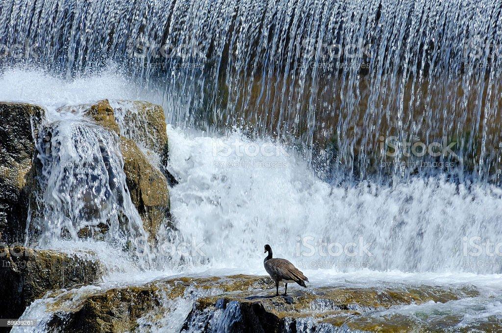 Idaho Falls royalty-free stock photo