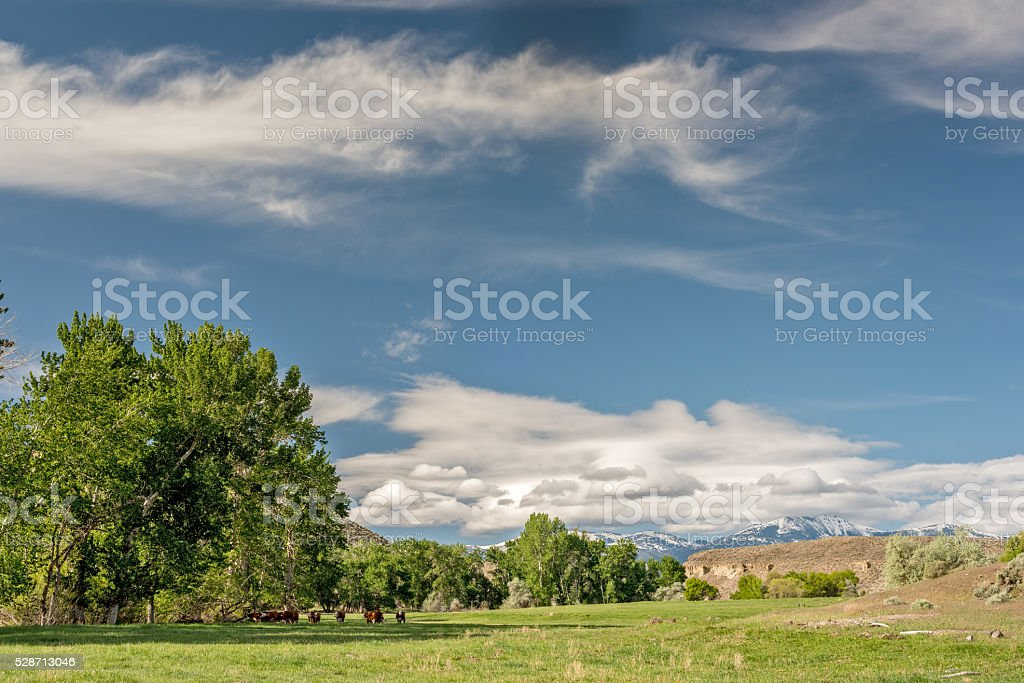 Idaho farm with cows and snowy mountains stock photo