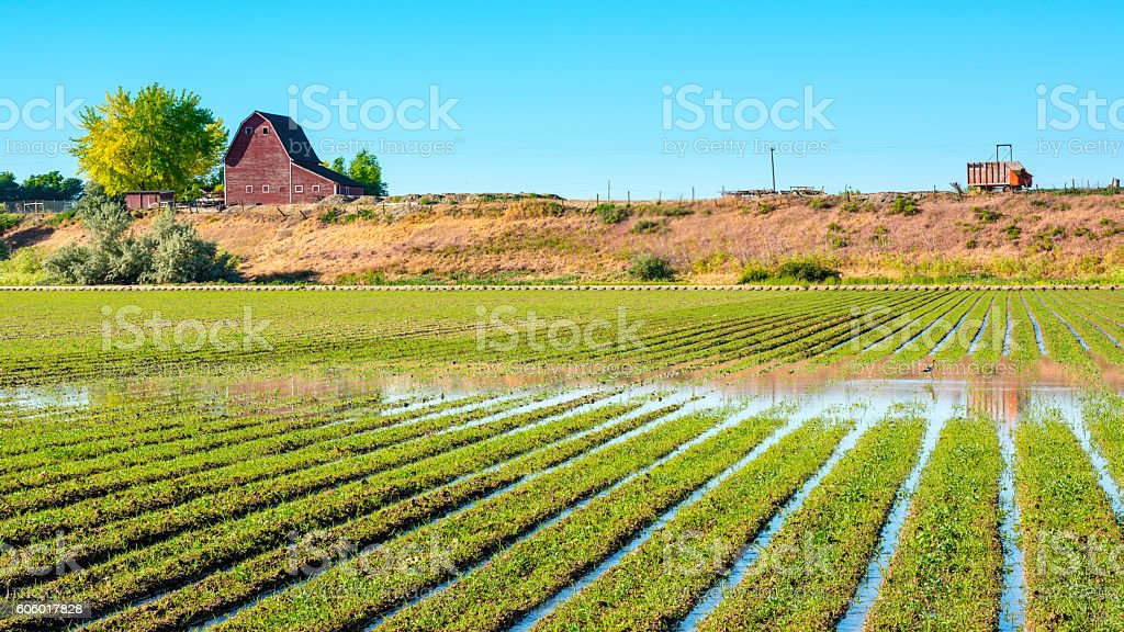Idaho farm with rows of crops in a field stock photo