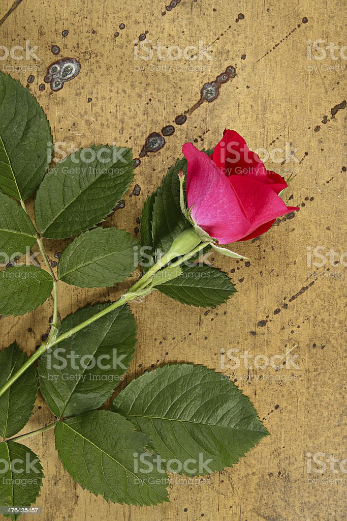 Idea with flower royalty-free stock photo
