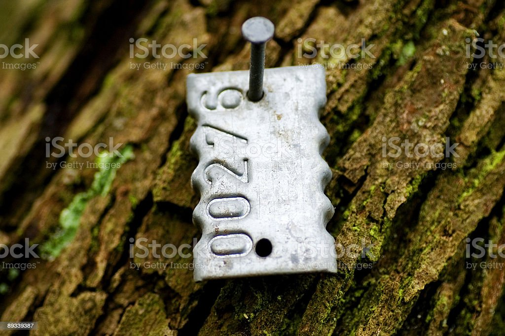 Identification Tag Nailed to a Tree... stock photo