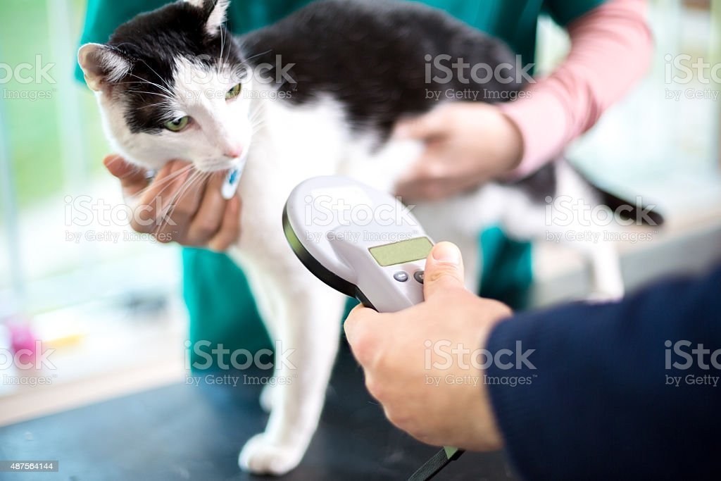 Identifying cat with microchip device stock photo
