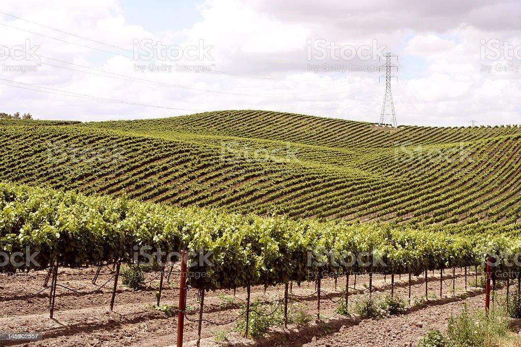 Idillyc vineyards on small slopes stock photo