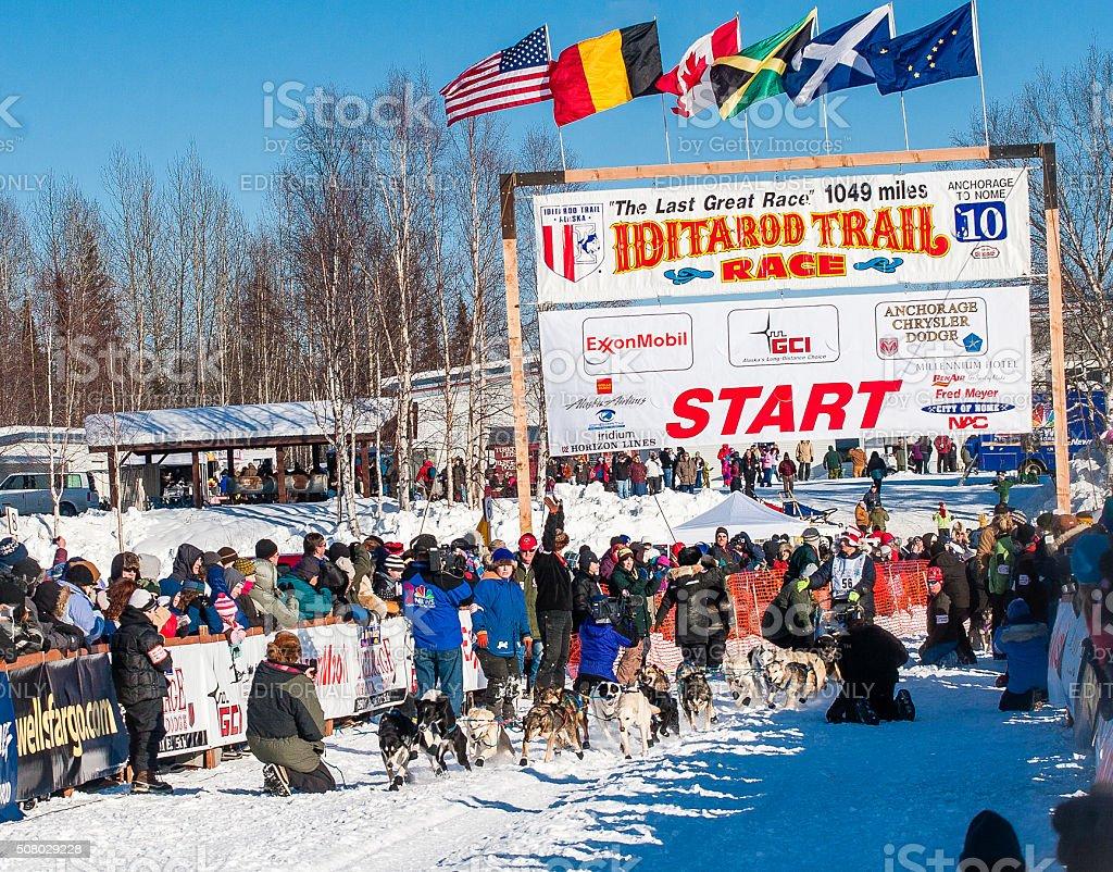 Iditarod sled dogs stock photo