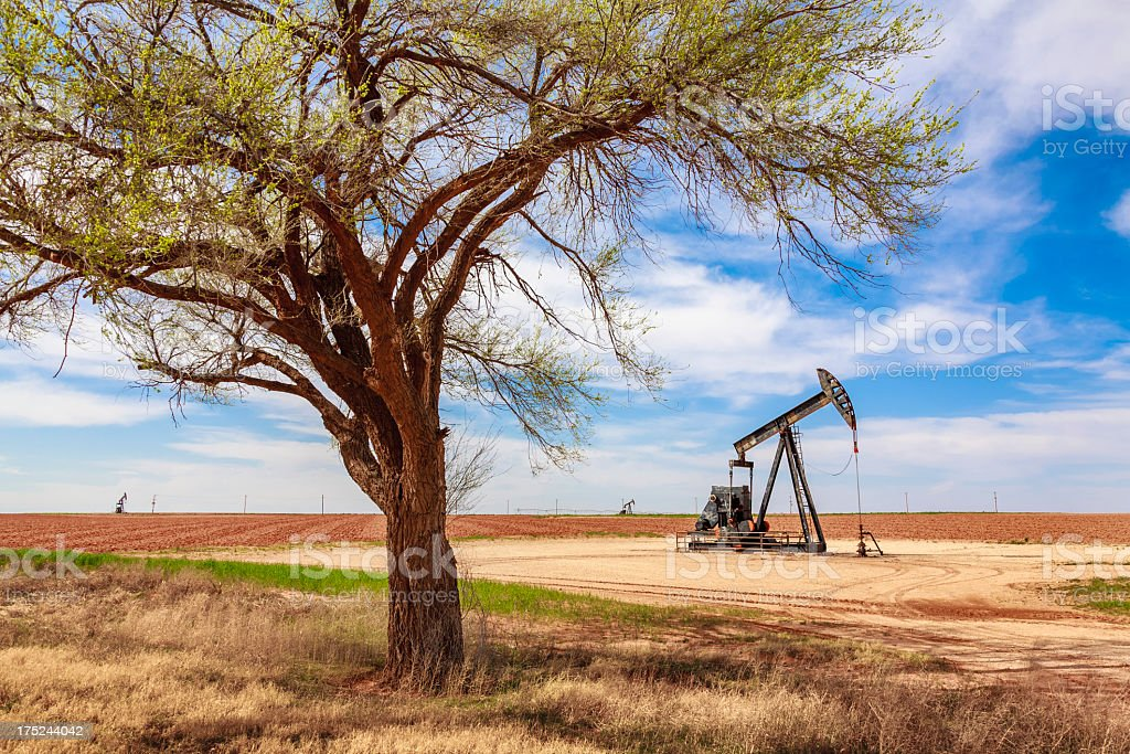 idle oil well pumpjack framed by tree, farmland, West Texas stock photo