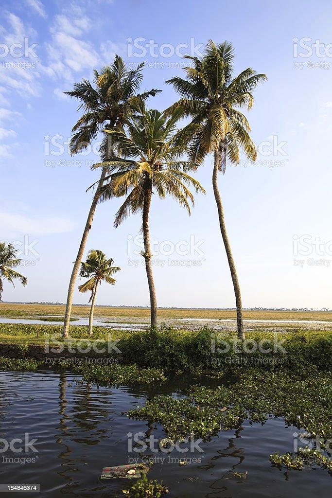 idylic palm trees stock photo