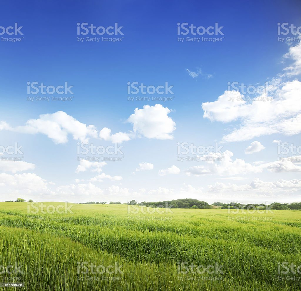 Idylic Summer Meadow stock photo