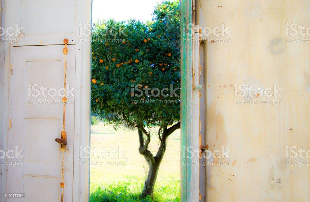 Idyll Vision Dreamlike Orange Tree Seen From Old Open Door stock photo