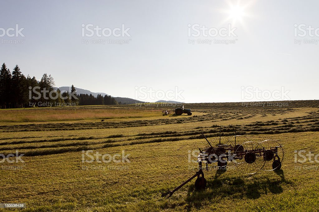 Idyllic agricultural scene stock photo