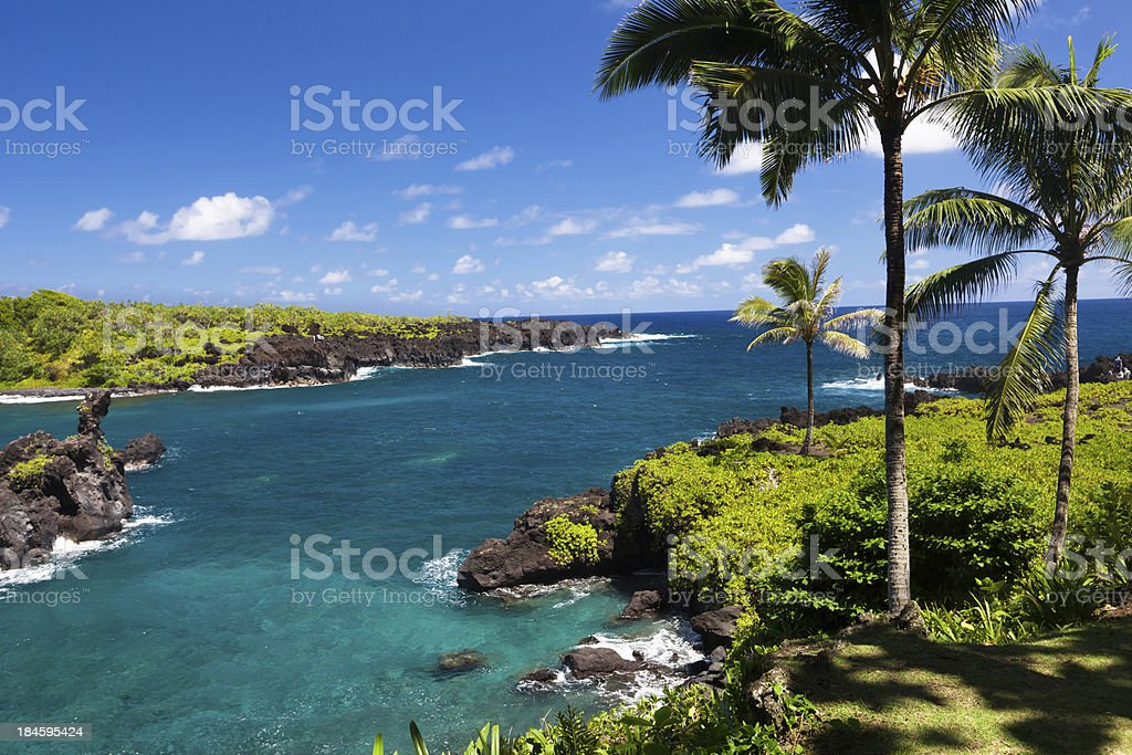 idyllic bay with palm tree and blue ocean, maui, hawaii stock photo