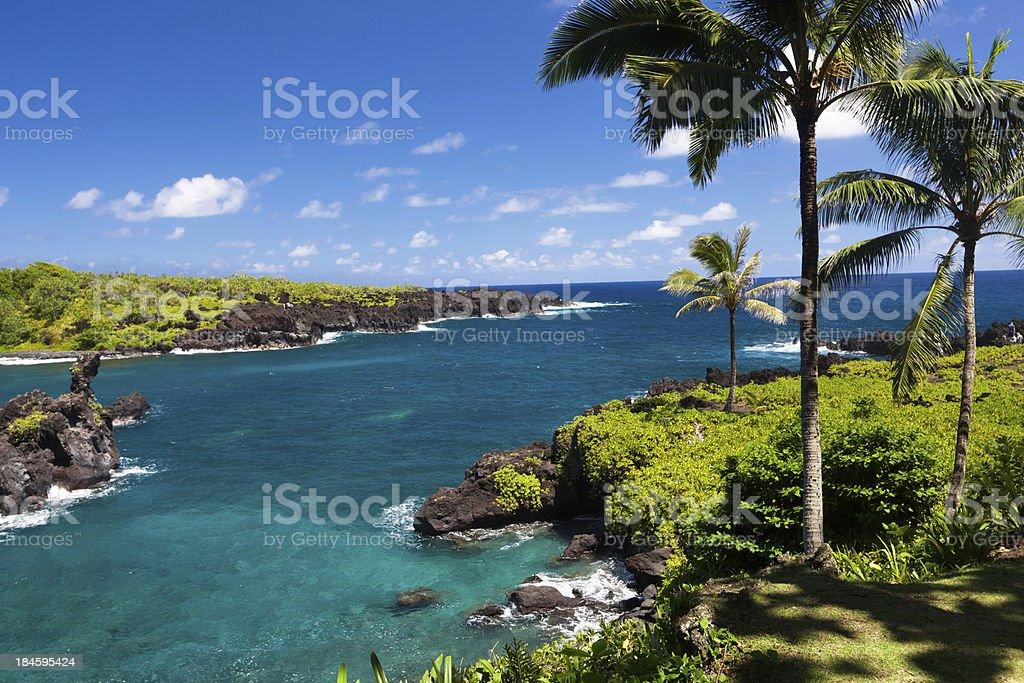 idyllic bay with palm tree and blue ocean, maui, hawaii stock photo