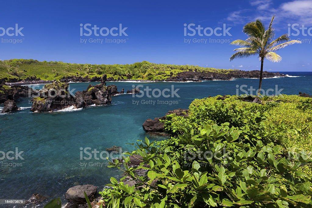 'idyllic bay with palm tree and blue ocean, maui, hawaii' stock photo
