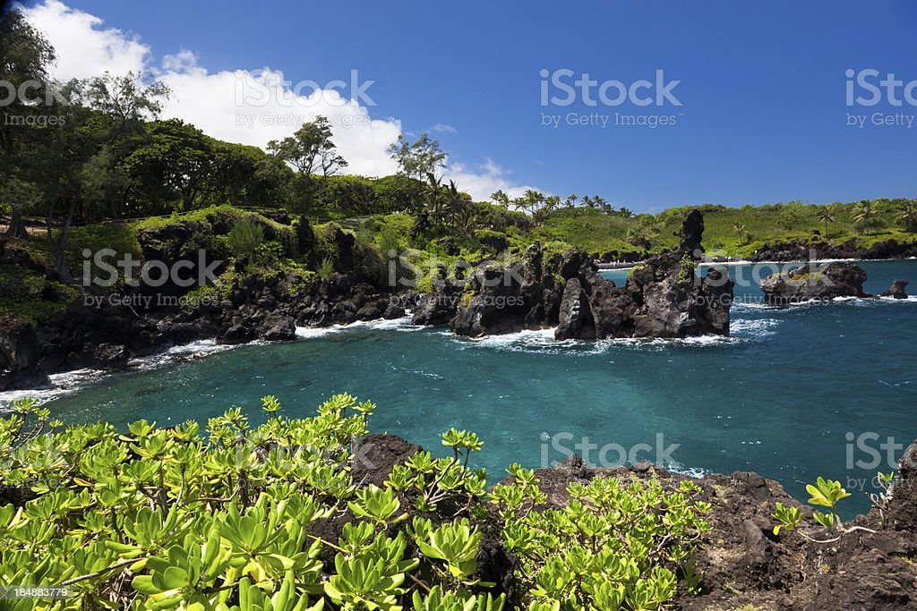 idyllic bay with tree and blue ocean, maui, hawaii stock photo