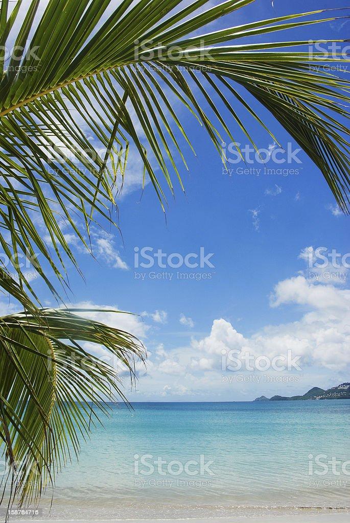 idyllic beach and palm tree border royalty-free stock photo
