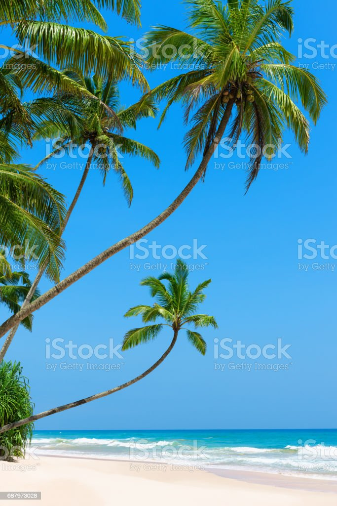 Idyllic empty tropical beach stock photo