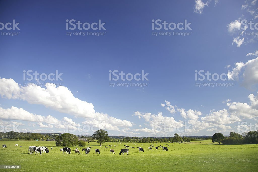 Idyllic Farm Pastures stock photo