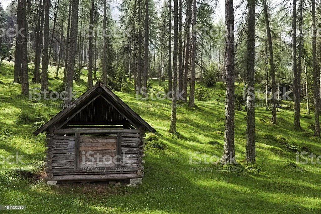 Idyllic forest royalty-free stock photo