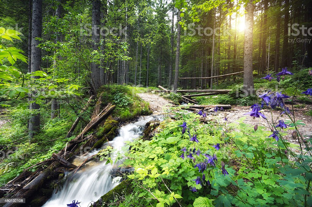 Idyllic Forest Stream stock photo