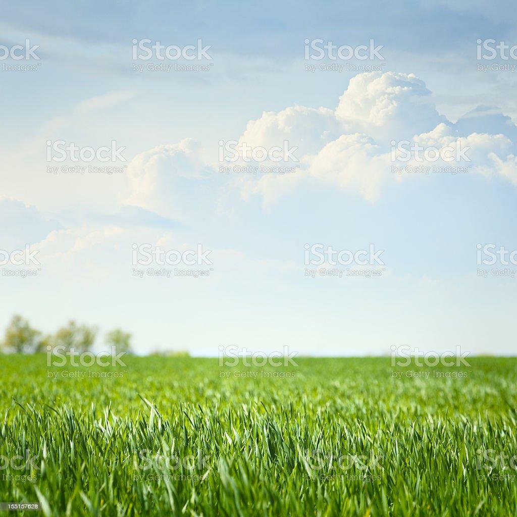 Idyllic grassland stock photo
