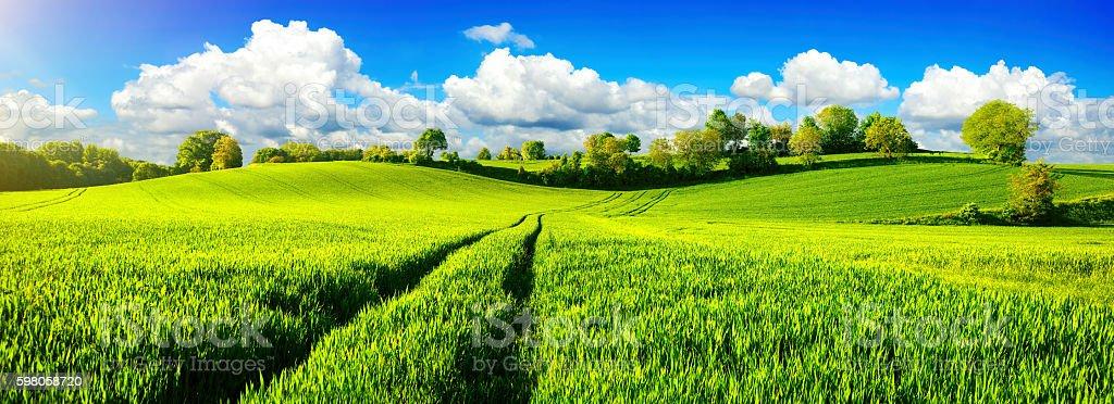 Idyllic green fields with vibrant blue sky stock photo