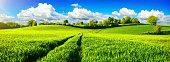 Idyllic green fields with vibrant blue sky