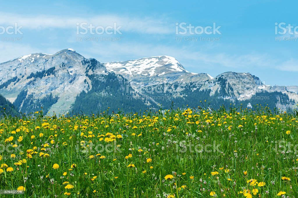idyllic landscape in Swiss stock photo