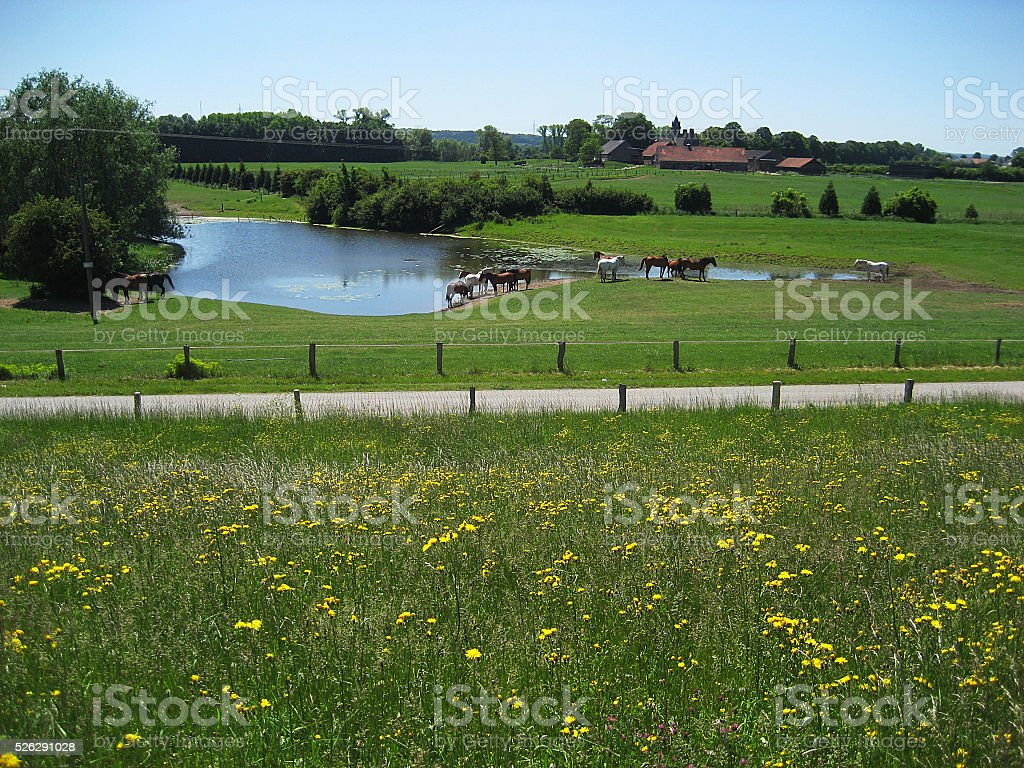 Idyllic landscape near Ooij, Netherlands stock photo