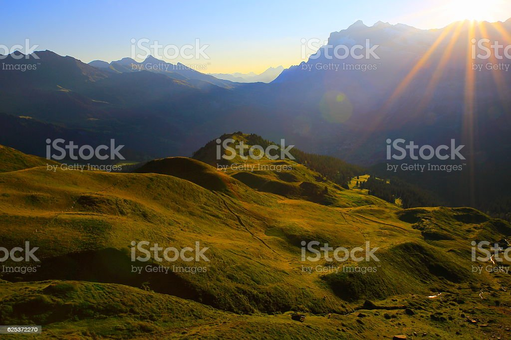 Idyllic meadows above Grindelwald valley: Swiss Alps sunrise sunny sunrays stock photo