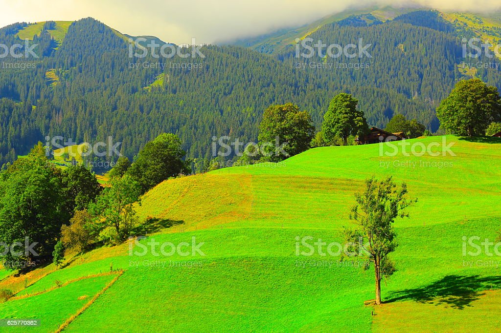 Idyllic meadows, Deciduous tree, upper engadine valley: Swiss Alps sunrise stock photo