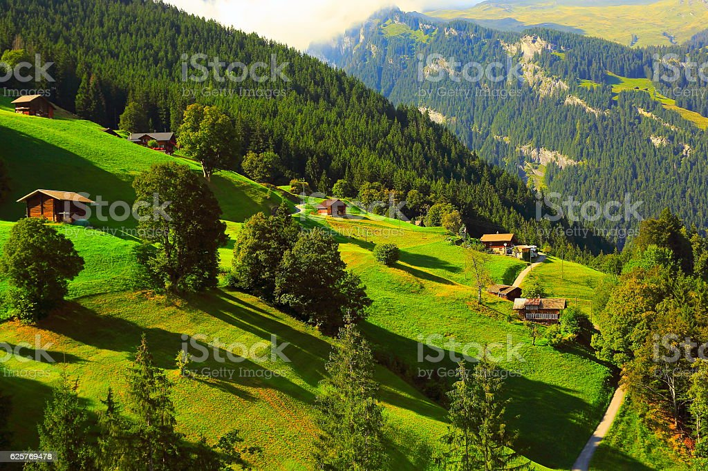 Idyllic meadows, Grindelwald chalets, pine trees: Swiss Alps sunrise stock photo