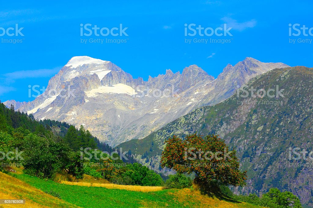 Idyllic meadows, lonely tree, upper engadine valley: Swiss Alps stock photo
