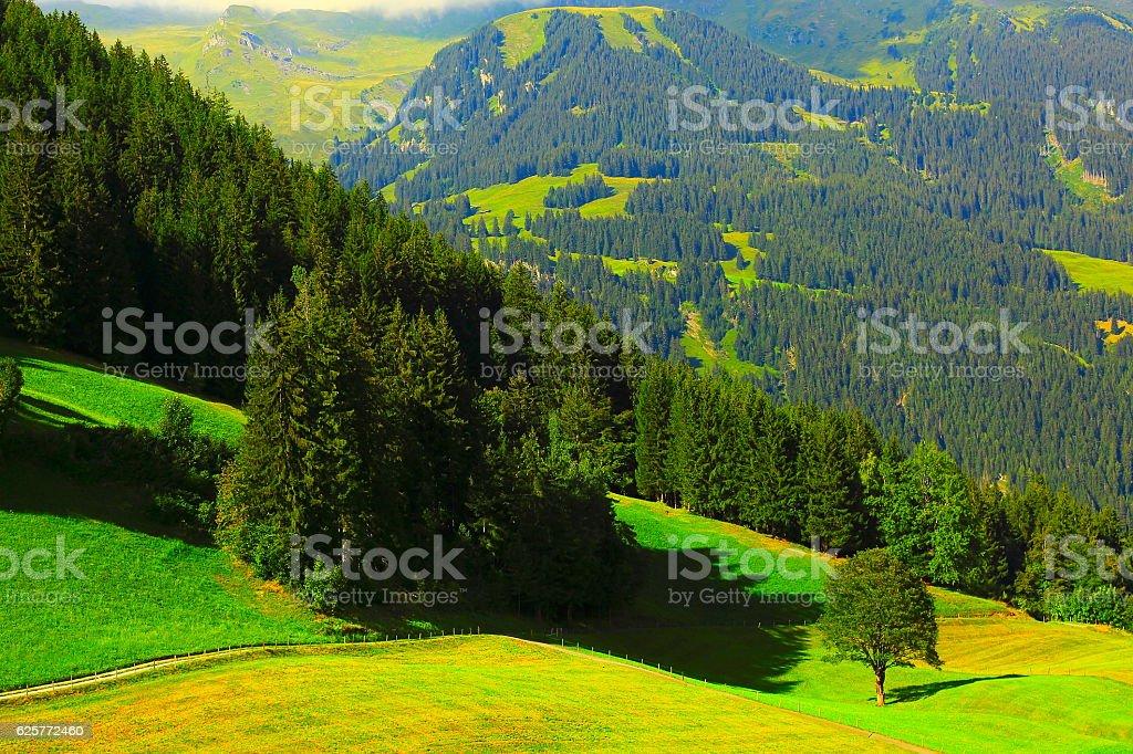 Idyllic meadows, upper engadine valley trail: Swiss Alps sunrise stock photo