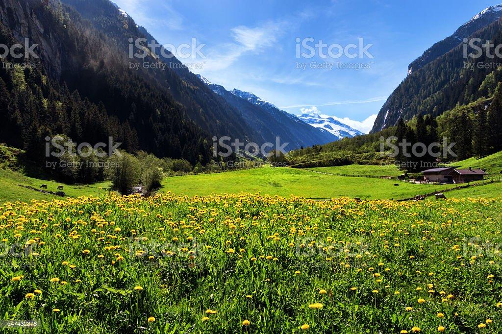 Idyllic mountain landscape in the Alps. Stilluptal, Austria, Tyrol. stock photo