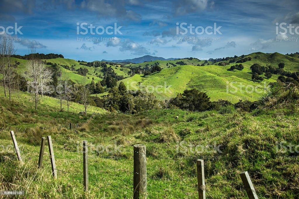 Idyllic New Zealand Rural Landscape stock photo
