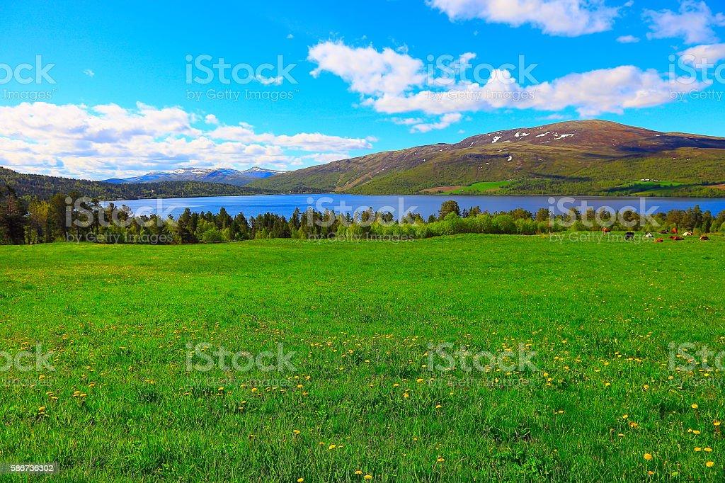 Idyllic Norwegian Green coutryside, Mountain, fjord landscape, Norway, Scandinavia stock photo