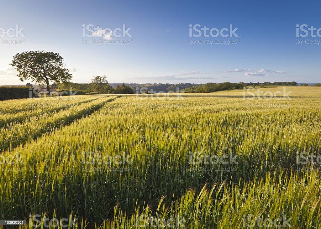 Idyllic rural, Cotswolds UK royalty-free stock photo