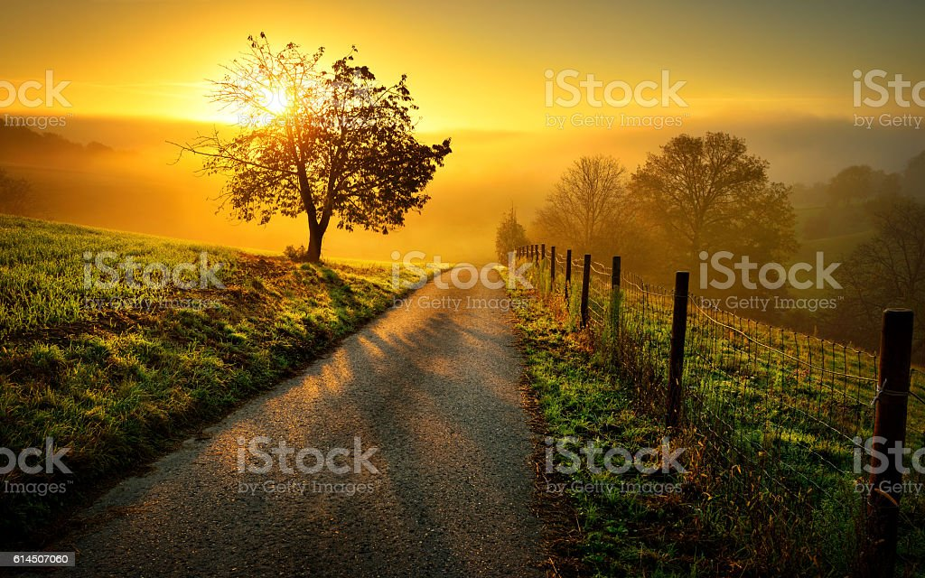 Idyllic rural landscape in golden light stock photo