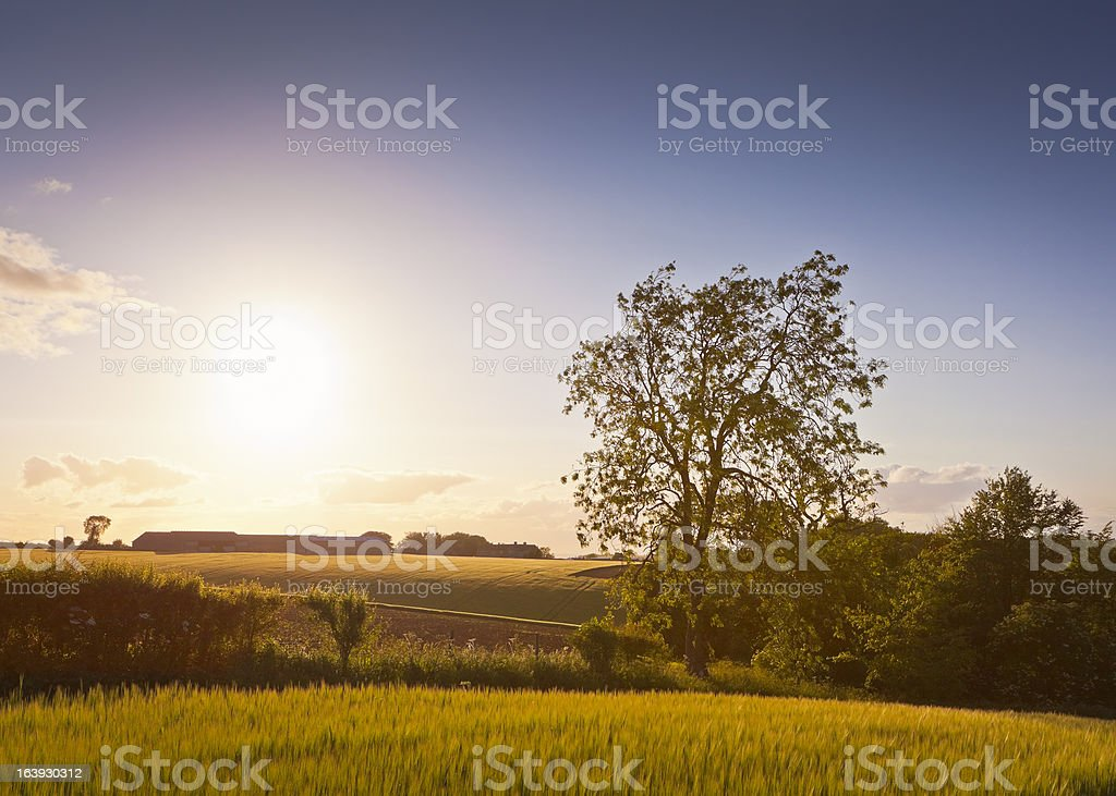 Idyllic rural sunset, Cotswolds UK stock photo