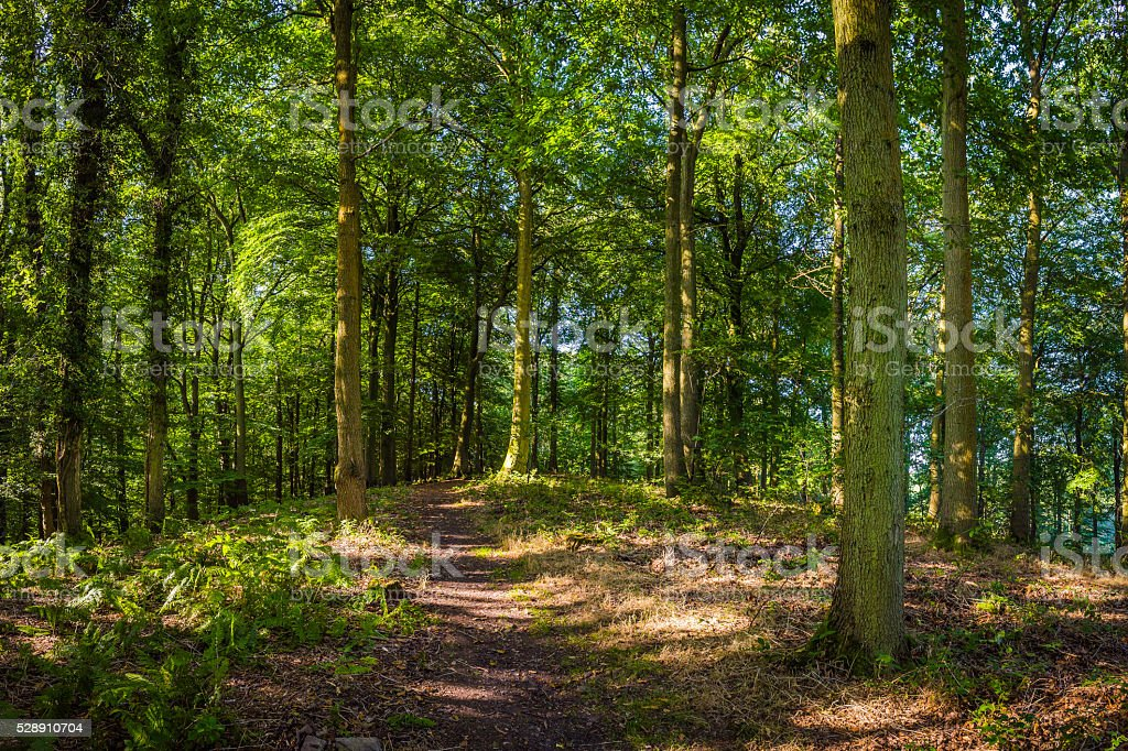 Idyllic summer forest earth trail beneath wild green woodland canopy stock photo